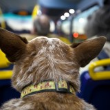 bus-dog-trip-hd-wallpaper