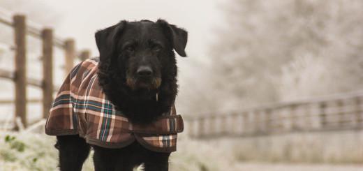 dog-614865